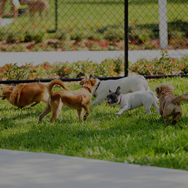 Large Dog Park at Liberty Heights Apartments